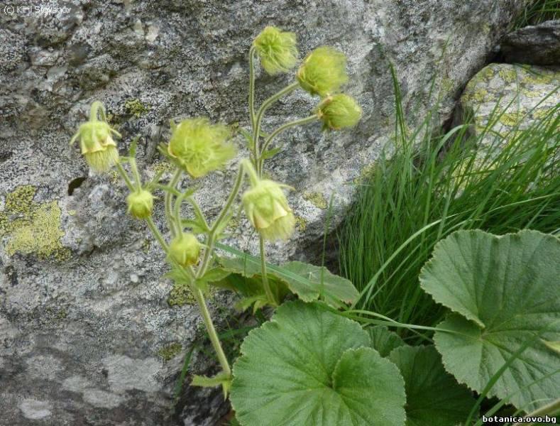 Ботаника IV. Флора на България